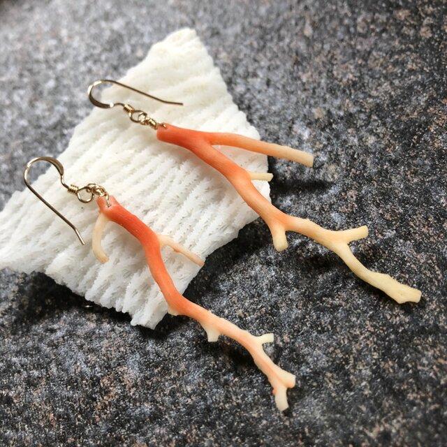 """Twig coral pierce """"海からそのままやって来た枝珊瑚のシングルピアス""""の画像1枚目"""