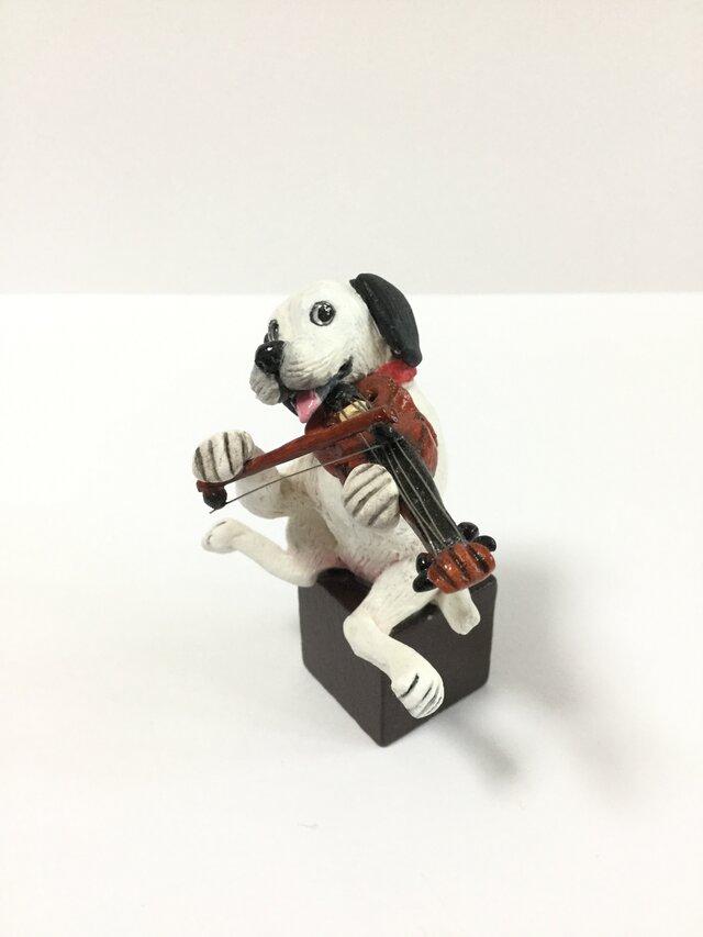 犬とバイオリンの画像1枚目
