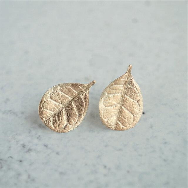 Feijoa leaf stud earrings (Small) {EP064K10}の画像1枚目