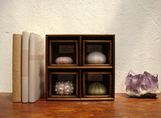 ウニ殻骨格標本箱4個セット(小さめ)その二。の画像1枚目