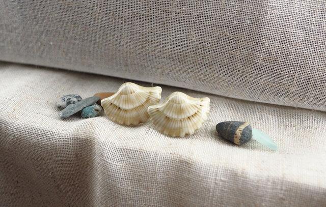 貝殻の耳飾り(ピアス)の画像1枚目