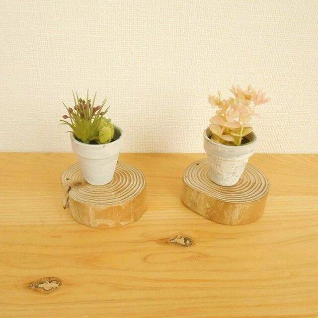 【温泉流木】美しい年輪丸太のミニ台座小2枚セット もの置台 流木インテリアの画像1枚目