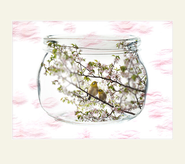 透明瓶シリーズ 山桜と2羽の目白の画像1枚目