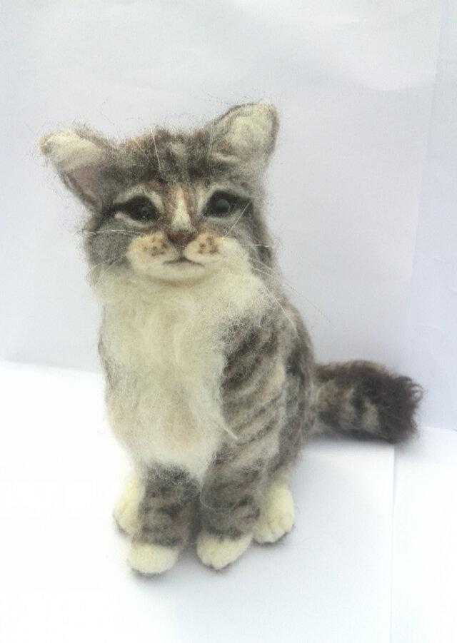 羊毛フェルトのラガマフィン子猫の画像1枚目