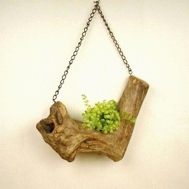 【温泉流木】L字V字の立派な流木の吊り式飾り台 流木インテリアの画像1枚目
