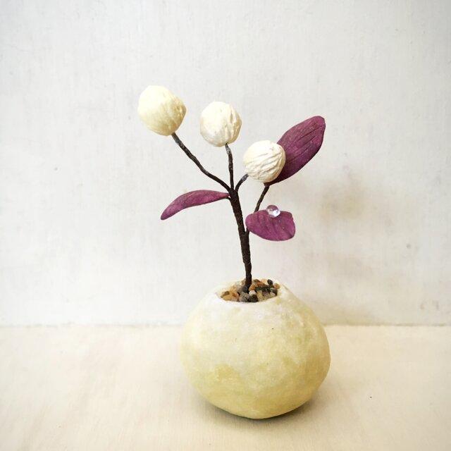 3137.bud 粘土の鉢植え 赤葉センニチコウの画像1枚目