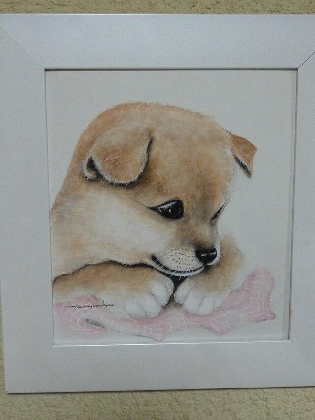 ふわふわの可愛いい子犬ちゃんの画像1枚目