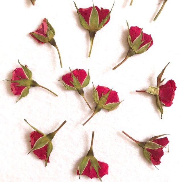 ミニ薔薇の蕾  10枚の画像1枚目
