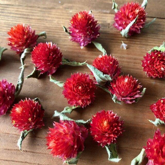 千日紅ヘッド15個 赤レッド ストロベリーフィールド ドライフラワー花材 ハーバリウム リース ボタニカルキャンの画像1枚目