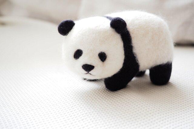 パンダの画像1枚目