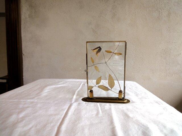 植物標本 ■押し花 ガラスボード■クレマチス ベルテッセン Bの画像1枚目
