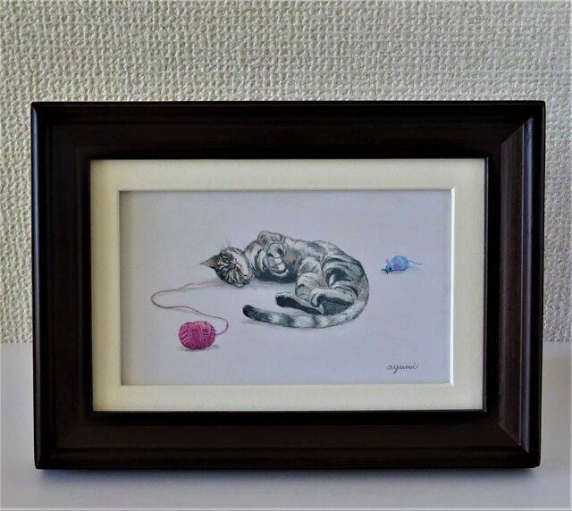 【ごろりん猫・アメリカンショートヘア】の画像1枚目