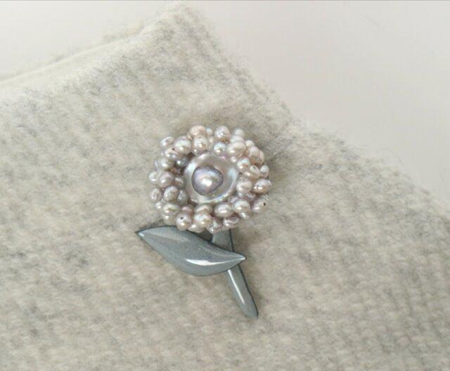 真珠のアルマジロ君の画像1枚目