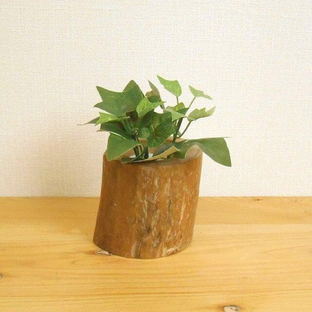 カルチャー ハイドロ ハイドロカルチャーに向いてる植物