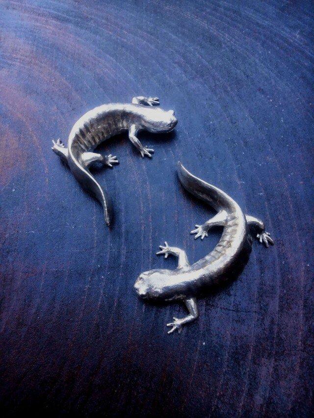 錫の霞山椒魚の画像1枚目