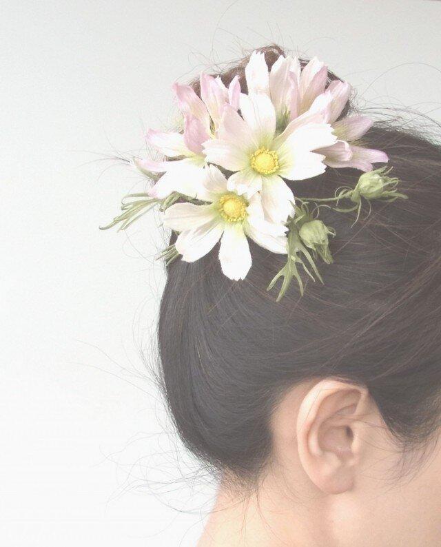白とピンクのコスモス M * シルク製 * コサージュ 髪飾りの画像1枚目