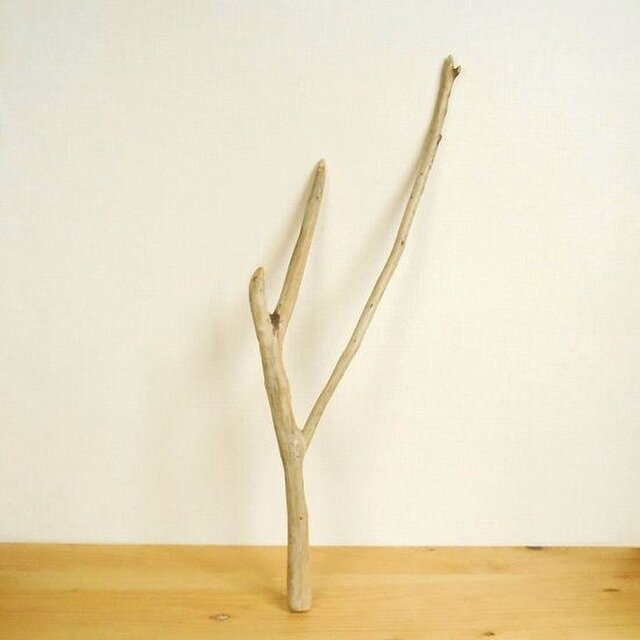 【温泉流木】勢いよく上へと伸びていく枝の流木 流木素材 インテリア素材 木材の画像1枚目