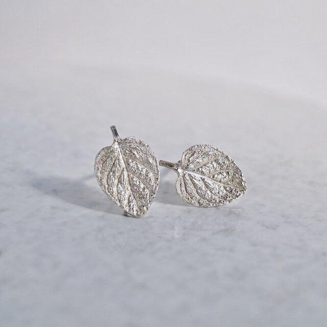 Marjoram stud earrings [EP062SV]の画像1枚目