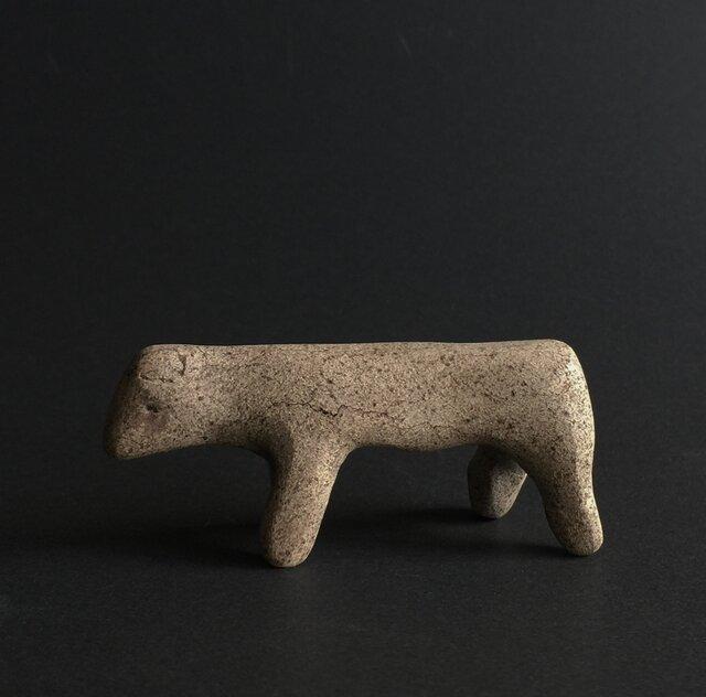 小さな犬の画像1枚目