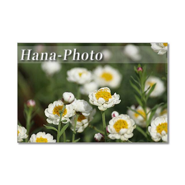 1382) 花かんざし、アネモネ、雲間草、ビオラ    ポストカード5枚組の画像1枚目