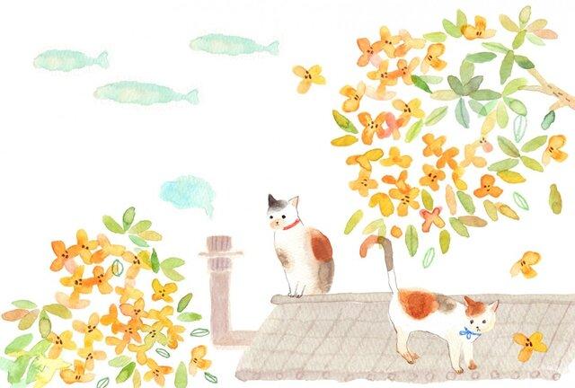 猫と金木犀の画像1枚目