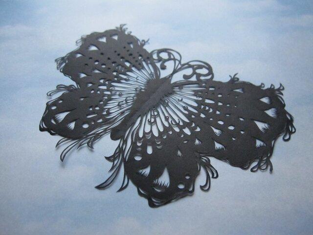 蝶の画像1枚目