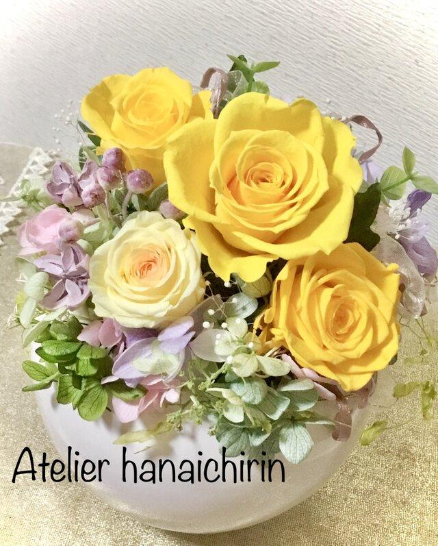 Sun Rose 黄色いバラの画像1枚目