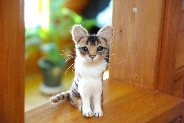 【キジトラ白猫ちゃん 大きめの子】 の画像1枚目
