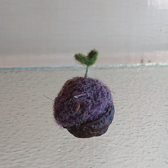 羊毛で作ったクルミの芽の画像1枚目