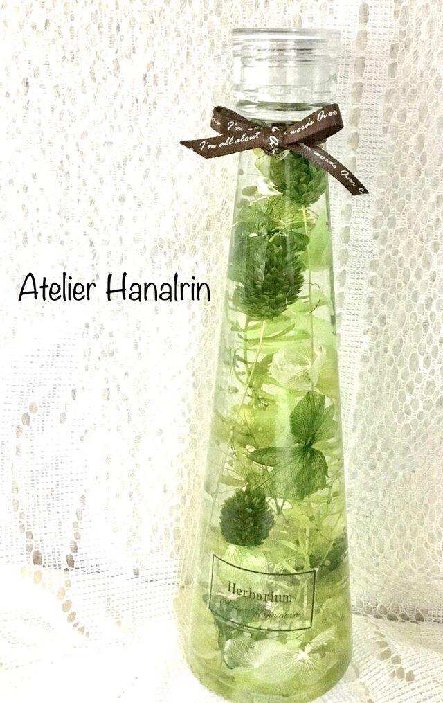 ハーバリウム  Green plantsの画像1枚目