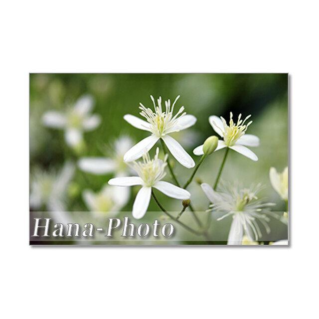 1417) センニンソウ、ジュズサンゴ、サンジカ、おしろい花、ランタナ .  ポストカード5枚組の画像1枚目