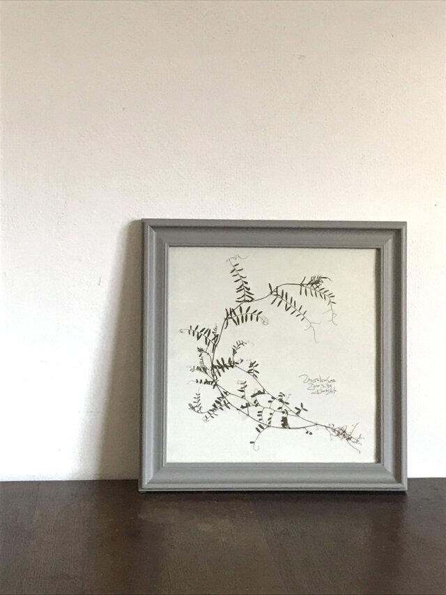 【身近な植物標本】スズメノエンドウ の画像1枚目