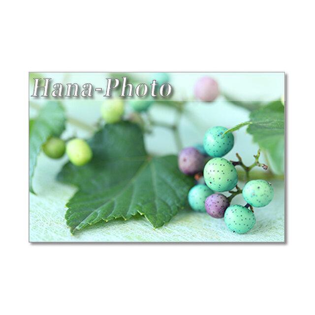 1418) 秋の美しい実たち(ノブドウ・アオツヅラフジ・ヨウシュヤマゴボウ)  ポストカード5枚組の画像1枚目