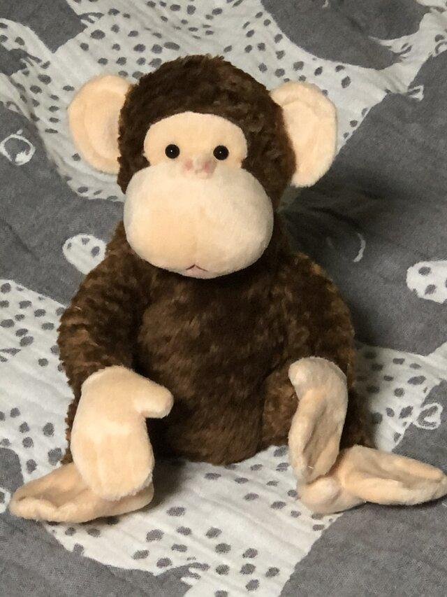 チンパンジーの画像1枚目