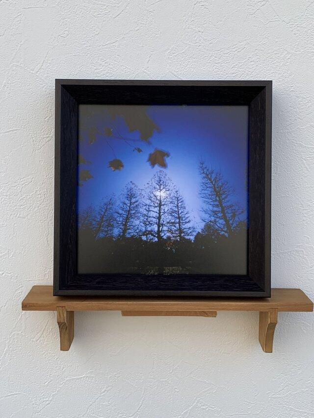 白夜の樹々の画像1枚目