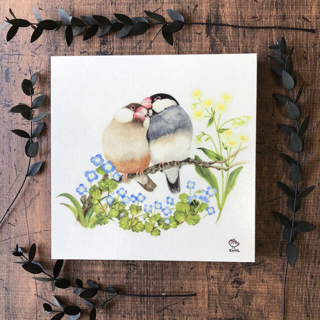 「文鳥 〜ふたりの時間〜」の18x18cm パネルの画像1枚目