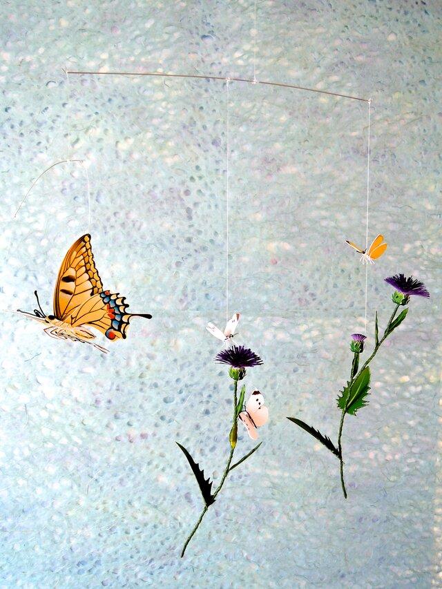 アザミと蝶たちの画像1枚目