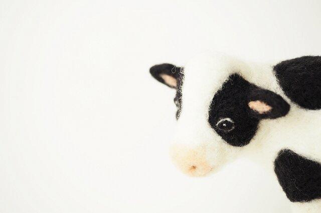 牛(Holstein)の画像1枚目