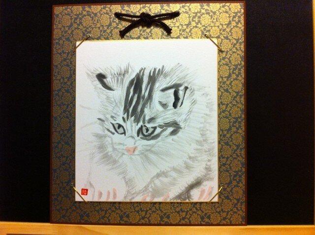 可愛らしい子猫の画像1枚目