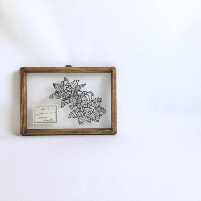 【植物標本シリーズ】フキノトウの切り絵フレームの画像1枚目