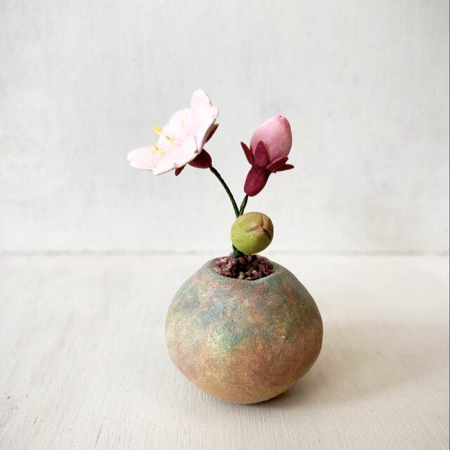 5496.bud 粘土の鉢植え サクラの画像1枚目