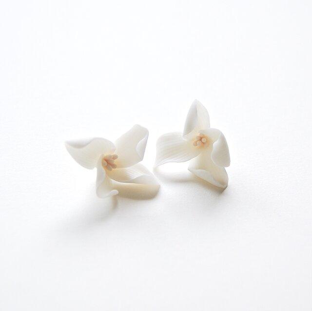 Gardenia Studの画像1枚目