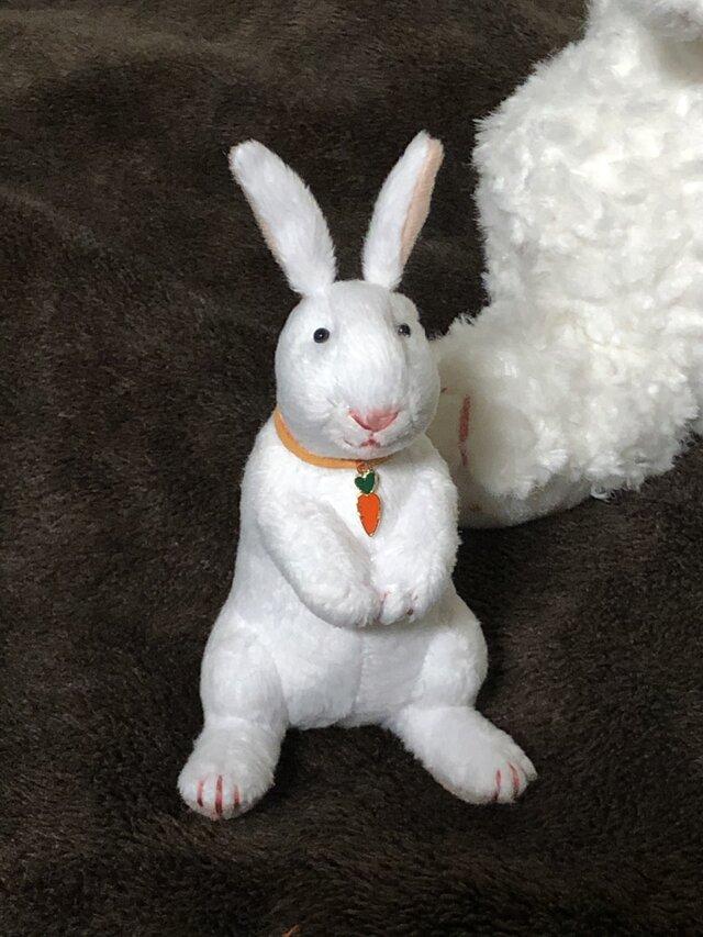 人参ウサギの画像1枚目