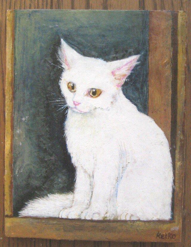 窓辺の猫 ターキッシュ・アンゴラの画像1枚目