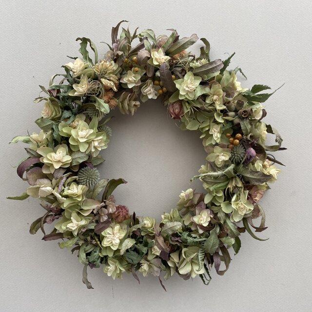 柏葉紫陽花のリースの画像1枚目