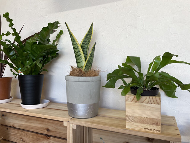 wood cube  木製 鉢カバー 観葉植物  ガーデニングの画像1枚目