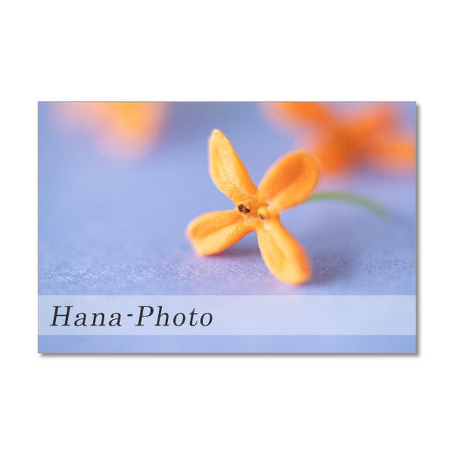 1495) キンモクセイのクロースアップ  ポストカード5枚組の画像1枚目