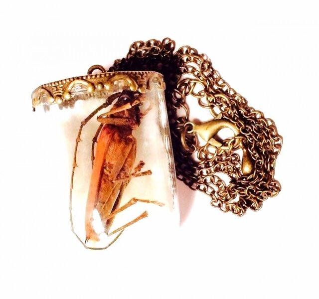 カミキリムシの昆虫標本ネックレスの画像1枚目