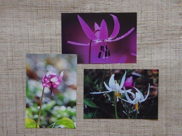 ポストカード3枚組 カタクリの花 三種の画像1枚目
