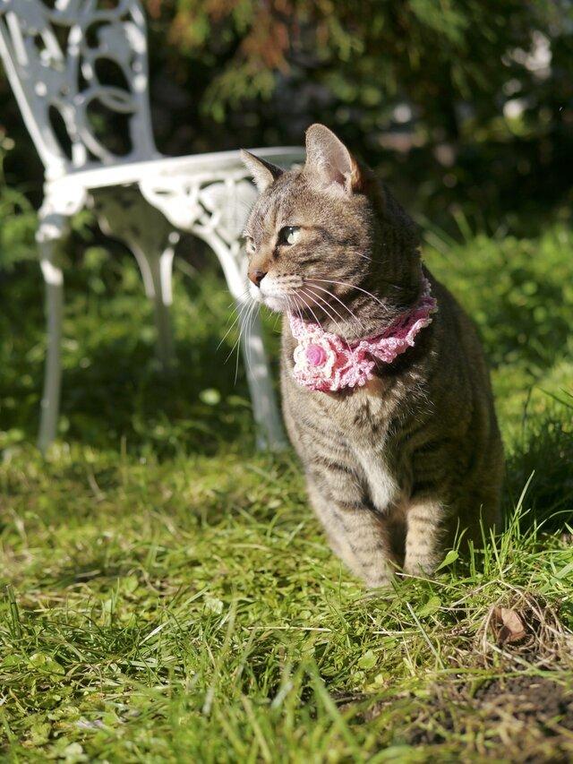猫の首輪の画像1枚目